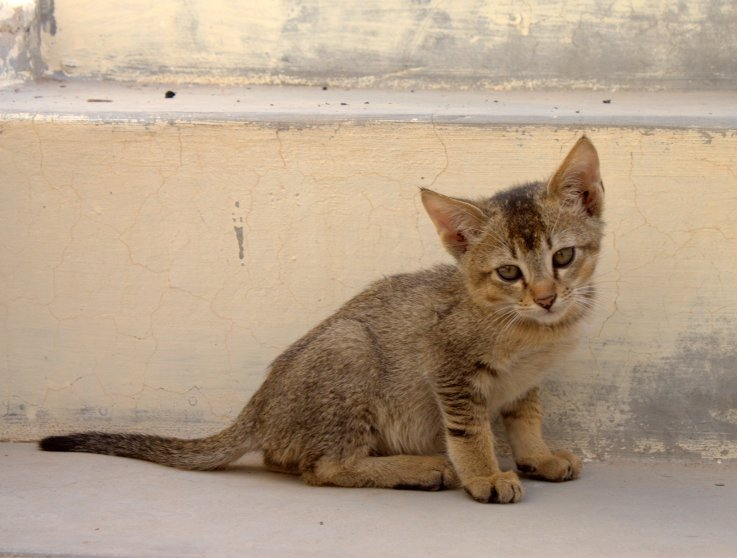 Kitty on the steps of Achal Niwas