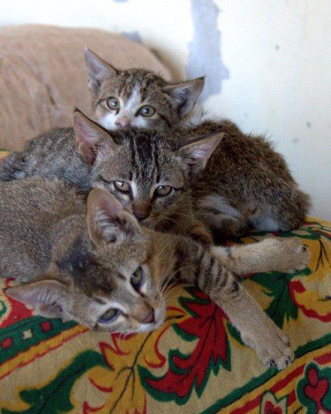 Cool kittys.