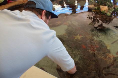 Touching some stingrays and starfish at AQWA.