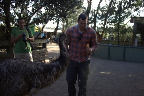 ...before the Emu stole all his animal feed!