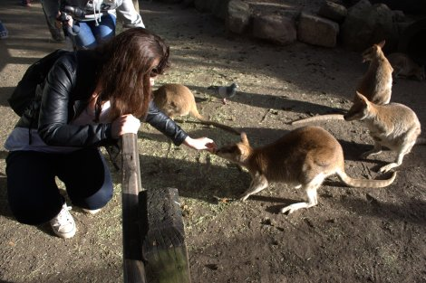 The kangaroos looked more innocent, but ran off with my food too!